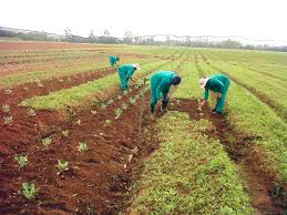 Agriculture enters golden age of public financing in Nigeria