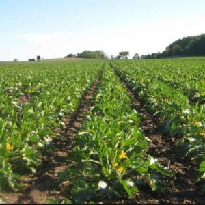 Using Soil Analysis to Deliver Personalized Region-Centric Fertilizers to African Farmers