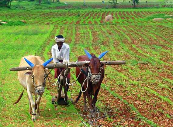 Sustainable Agriculture is Critical to Nigeria's Agricultural Transformation