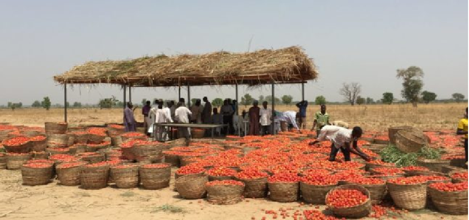 Farmcrowdy's $1M Seeded Agro-Aggregation Construct Business
