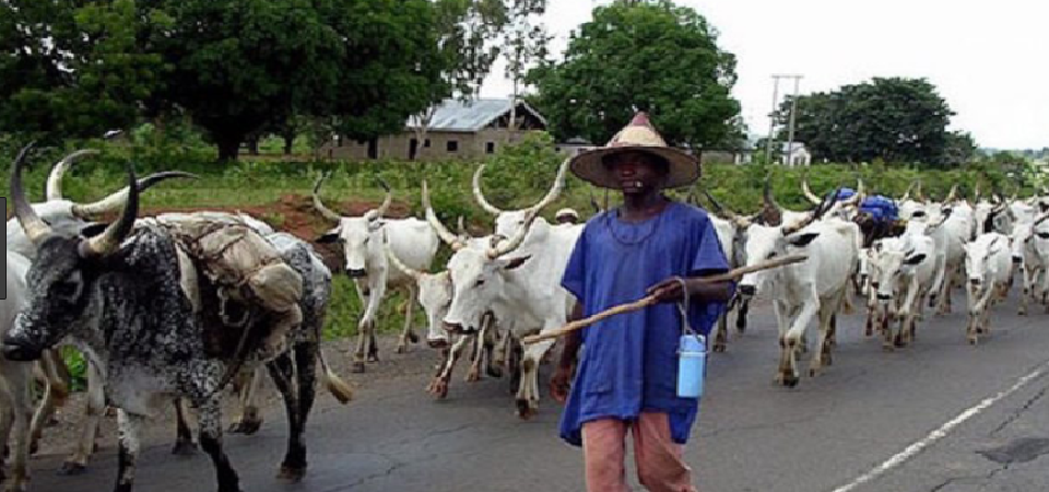 Comprehensive Explanation of RUGA Settlement Initiative in Nigeria