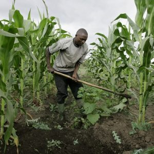 Does Agriculture Really Mean Peace in Nigeria?