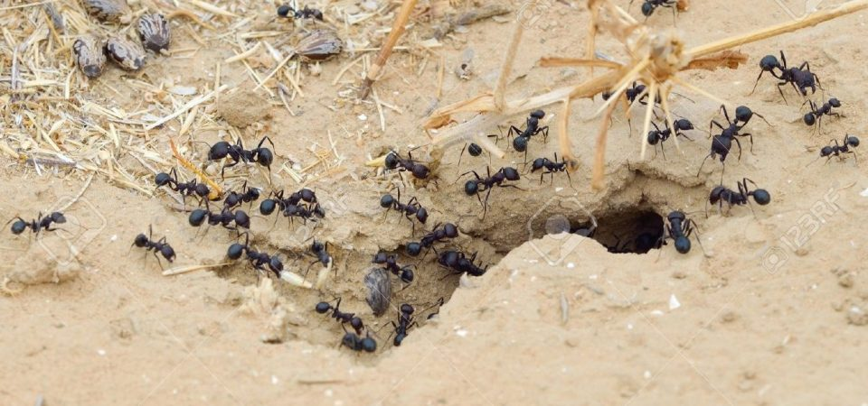 Oh Ye Entrepreneurs, Learn from the Ants and Delegate, to Avoid Mental Breakdown
