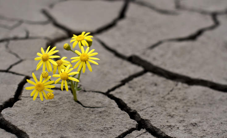 Building a People-Centered Approach to Business Resilience