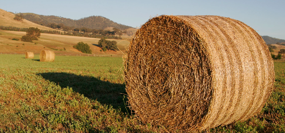 Owning The Hay In Business