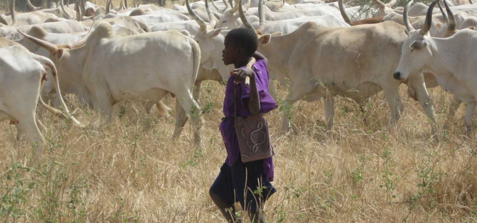 All You Need To Know About NLTP After Suspension of RUGA Settlement