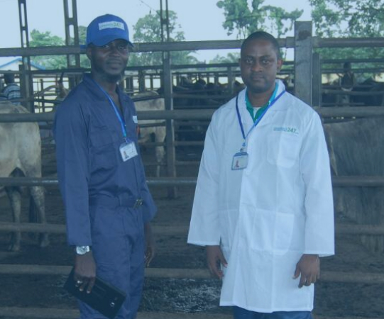 Livestock247 Provides Digital Platforms To Modernize Cattle Business in Nigeria