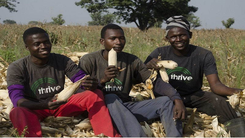 The Pain from Thrive Agric – and Message from Leadway Assurance