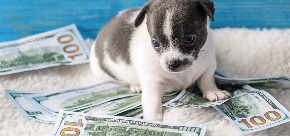 The Cautious Puppy (Financial Lessons from Puppies)