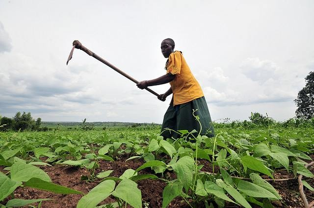 Honing and Going Pythagorean in Africa's Agriculture Industry